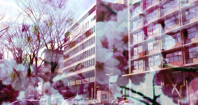千葉県議会と桜(イメージ)
