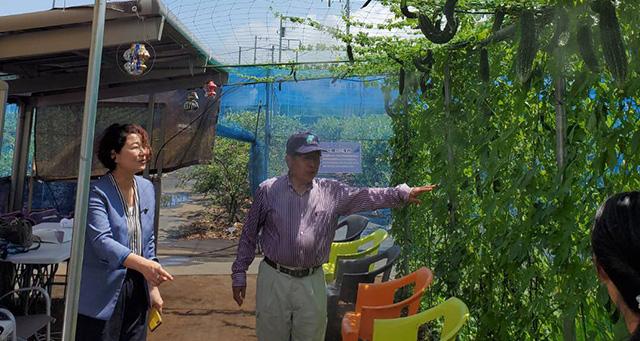 練馬区の観光ブルーベリー農園を視察する安藤じゅん子千葉県議会議員