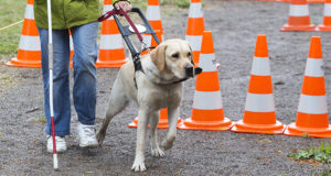 盲導犬体験 イメージ画像